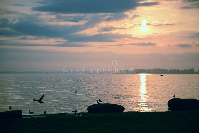 Mouettes sur la plage au lever de soleil photos stock