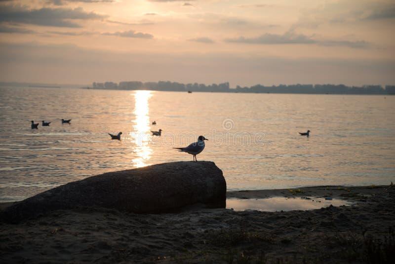 Mouettes sur la plage au lever de soleil image libre de droits