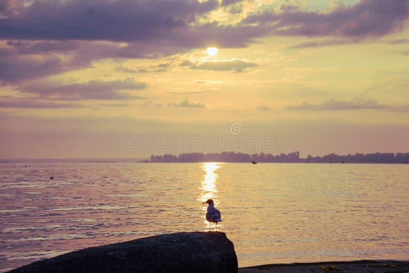 Mouettes sur la plage au lever de soleil images stock