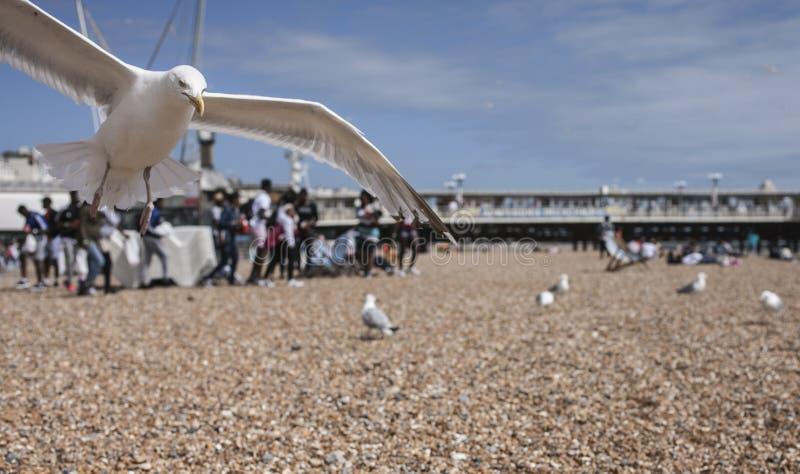 Mouettes sur la plage - un plan rapproché photos libres de droits