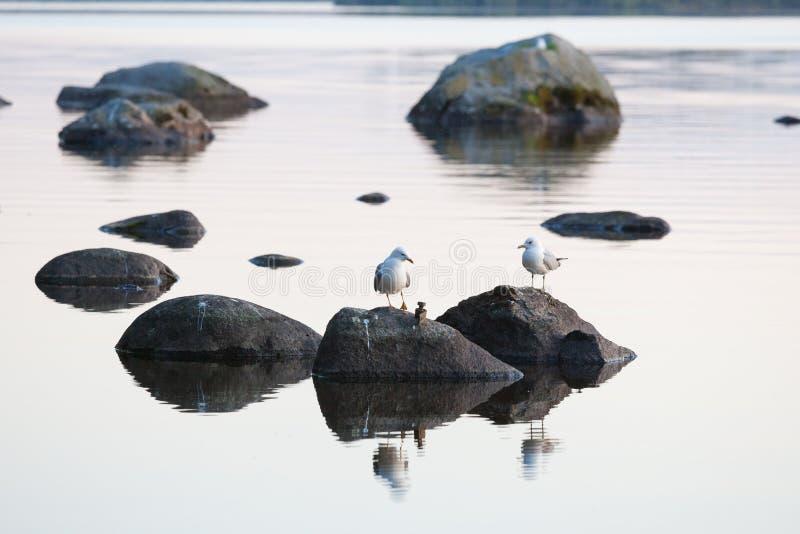 Mouettes sur la roche au lac calme photographie stock