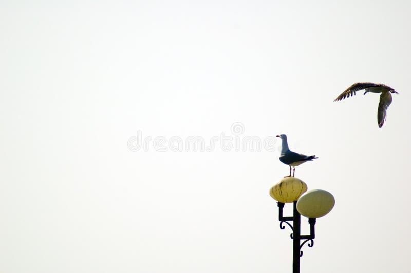 Download Mouettes Sur La Surveillance Image stock - Image du libre, hover: 732129