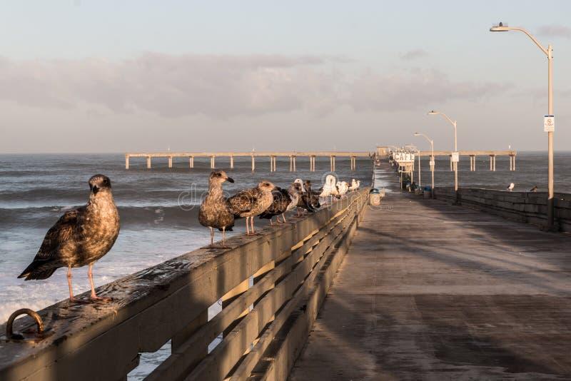 Mouettes sur le pilier de pêche de plage d'océan photos libres de droits