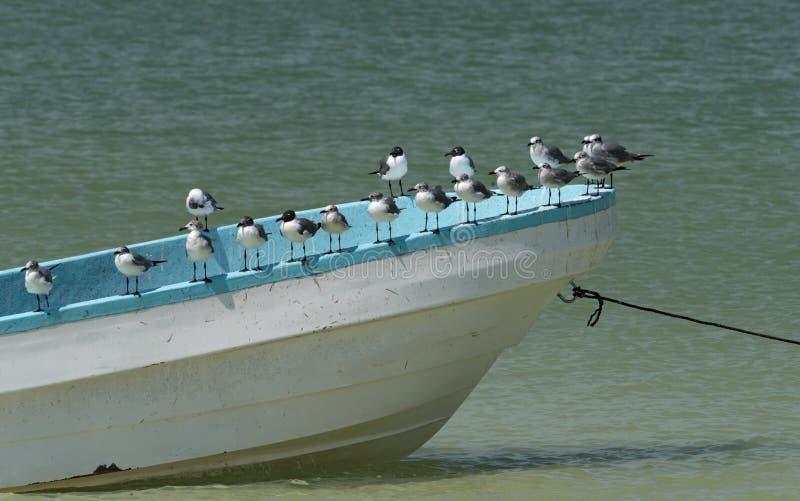 Mouettes sur un bateau de pêche sur la plage à l'île de Holbox, Mexique images stock