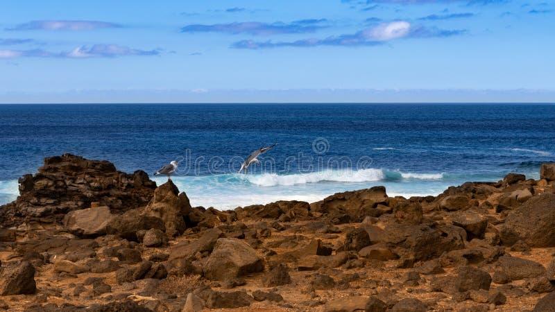 Mouettes sur une côte volcanique rocheuse photo stock
