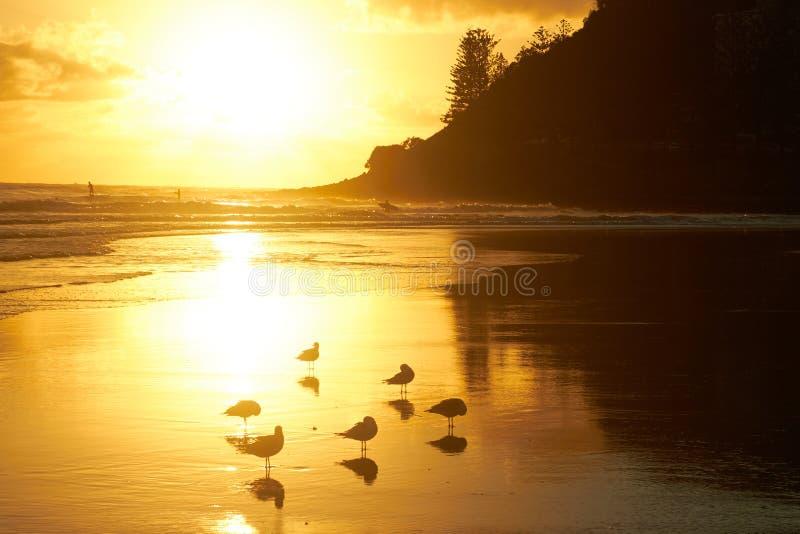 Mouettes sur une plage d'or glorieuse au lever de soleil photo stock