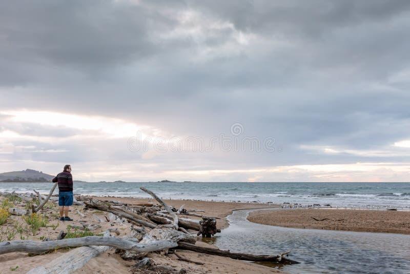 Mouettes sur une plage dans Ulverstone Tasmanie images libres de droits