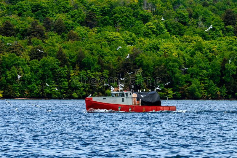 Mouettes traquant le bateau de pêche image stock