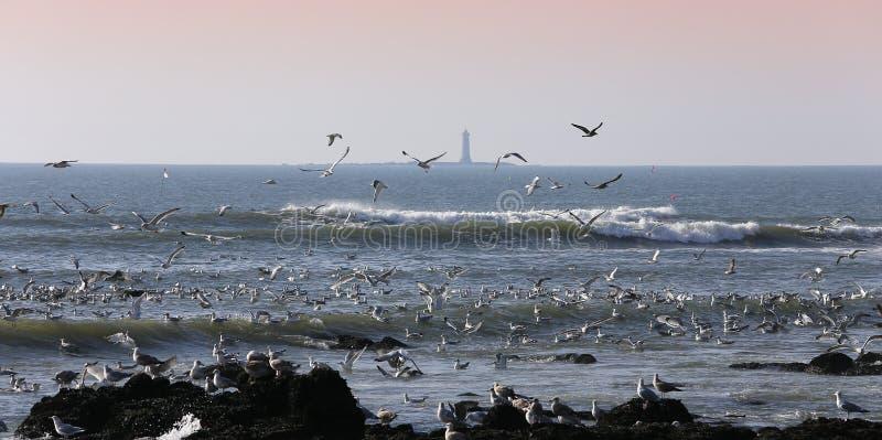 Mouettes volant au-dessus de l'océan photos stock