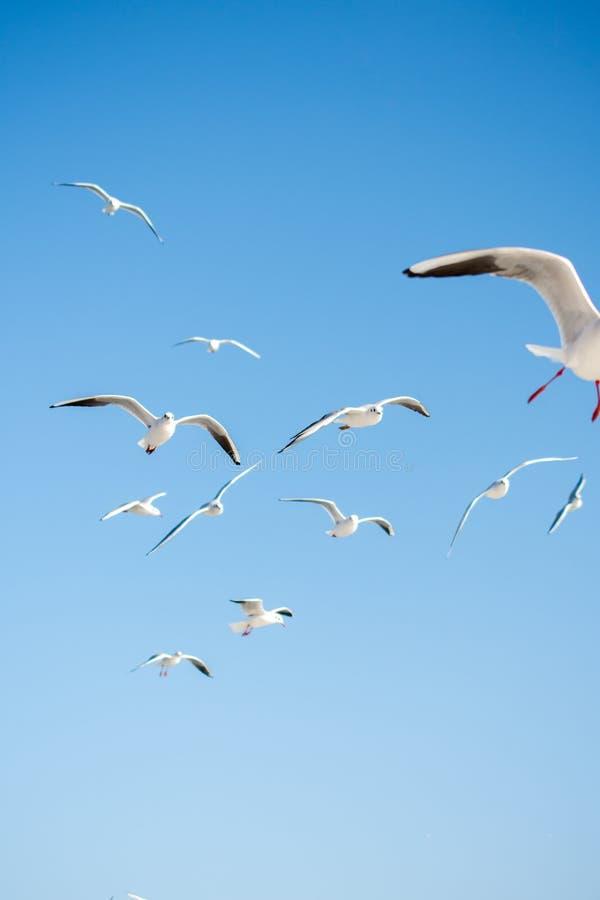 Mouettes volant dans le ciel images libres de droits