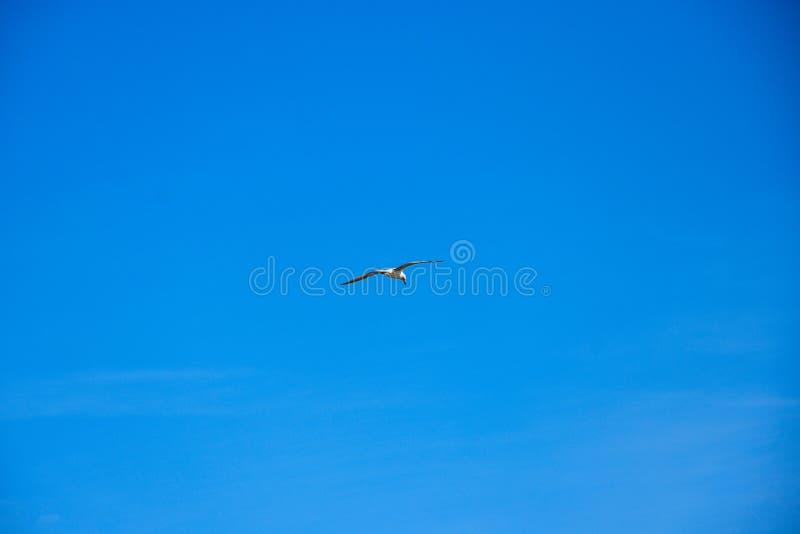 Mouettes volant dans le ciel photo stock