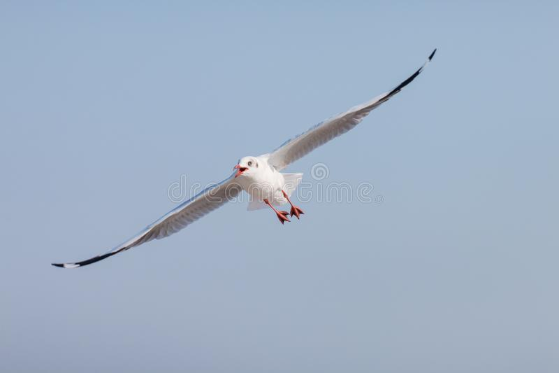 Mouettes volant parmi le ciel bleu photos libres de droits