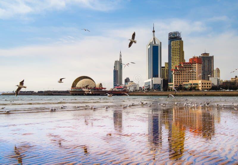 Mouettes volant sur la plage images libres de droits