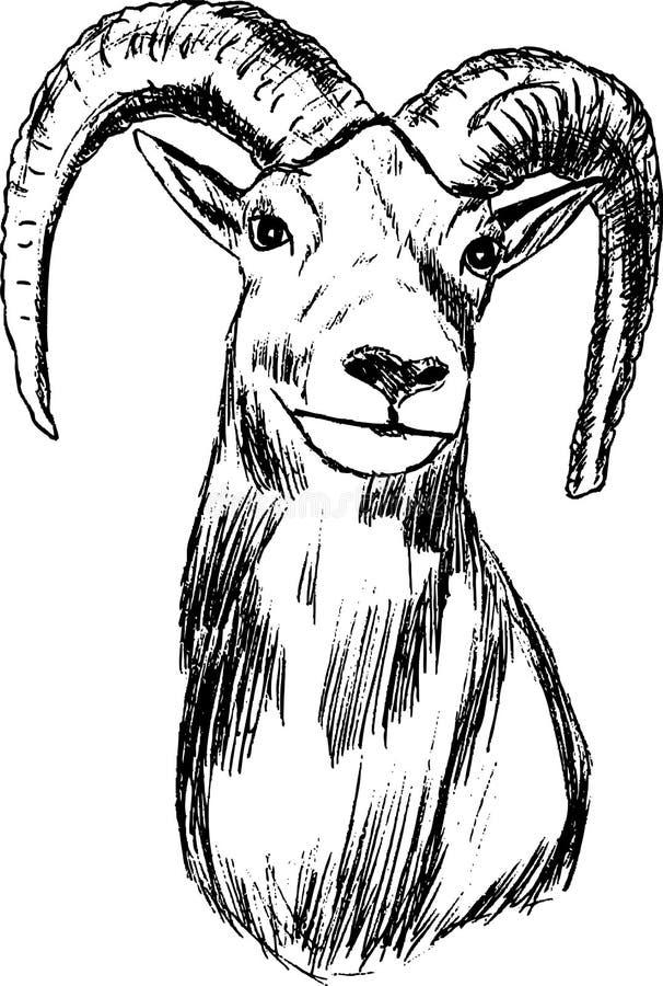 mouflon иллюстрация вектора