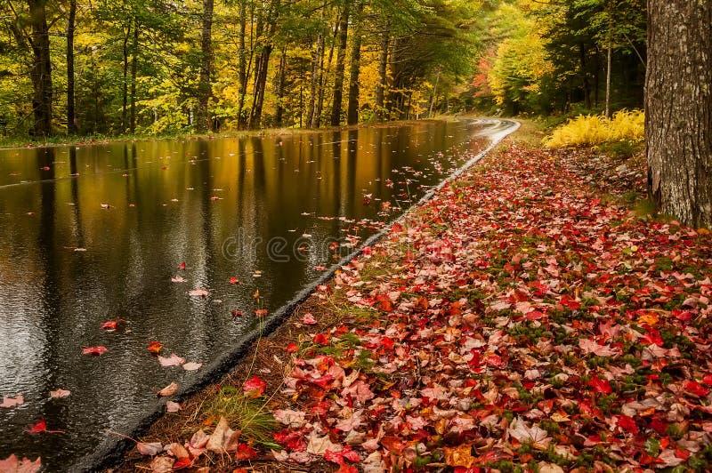 Mouillez de la route de pluie en beau parc d'automne Feuilles colorées lumineuses tombées sur une route humide de désert Parc nat photographie stock