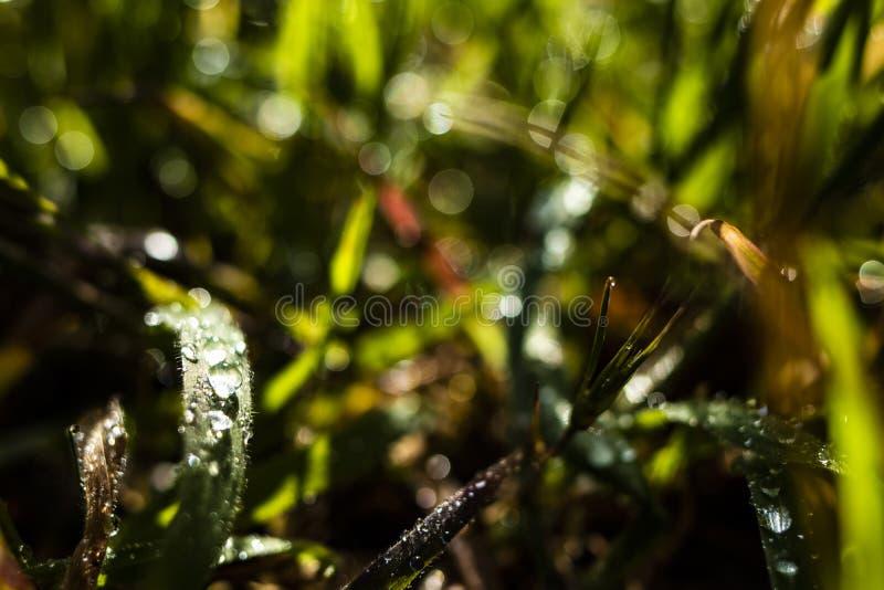 Mouillez les gouttes de pluie de matin au-dessus de l'au sol vert d'herbes photos libres de droits