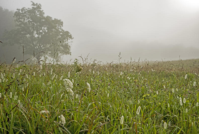 Mouillez sur des herbes dans un domaine dans la crique de Cades photographie stock libre de droits