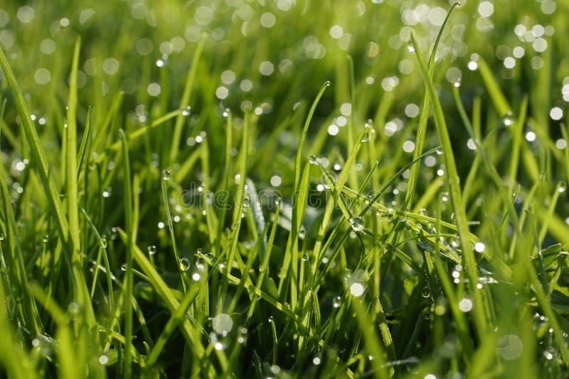 Mouillez sur une herbe. photos stock