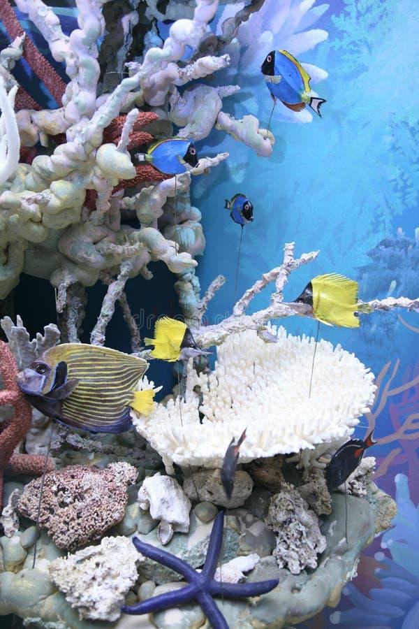 Moulage tropical do recife imagem de stock royalty free