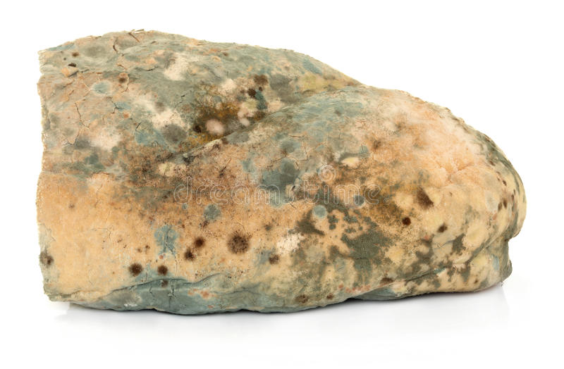Download Mould on Bread stock photo. Image of bread, loaf, food - 24735530