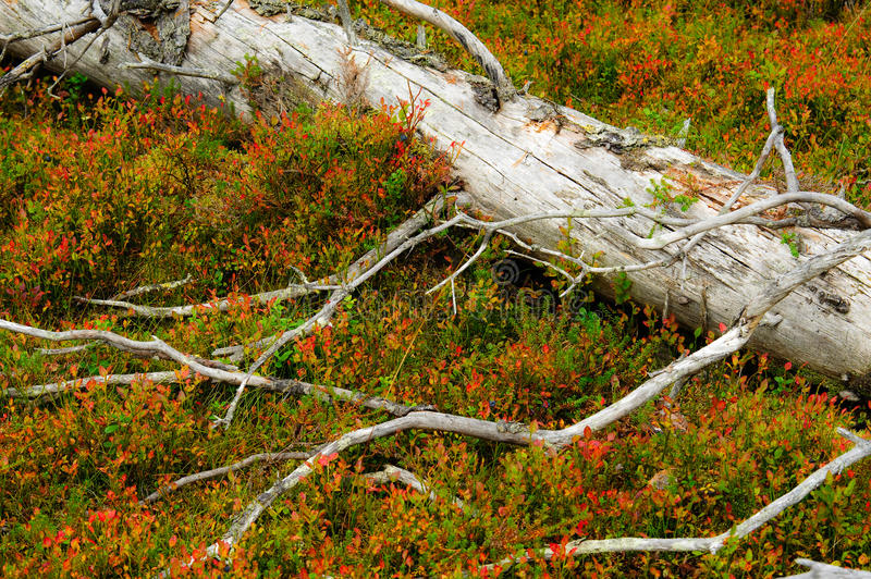 Download Moulder spruce stock image. Image of autumn, fall, spruce - 24098909