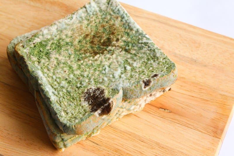 Mouldy хлеб - серия 2 стоковое фото