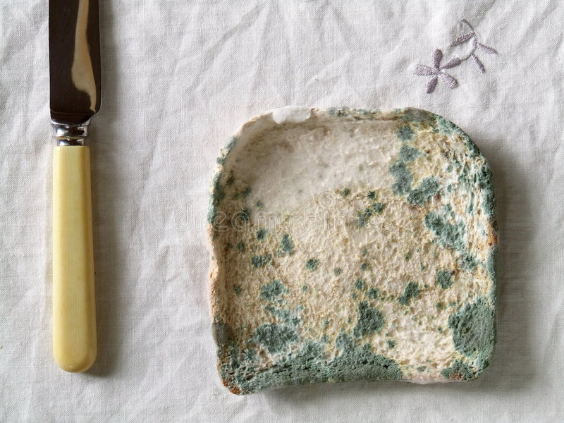 Mouldy Bread stock photo