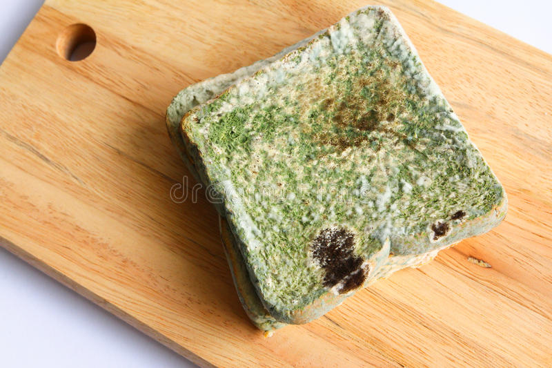 Mouldy bread royalty free stock photos