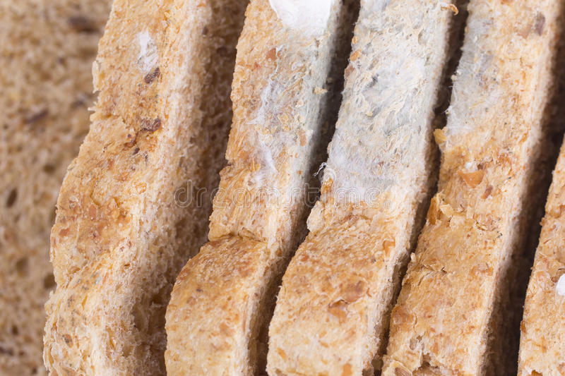 Mouldy bread. Slices of a mouldy bread stock photo