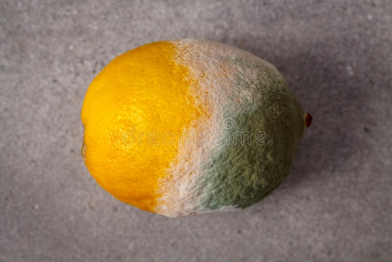 Mouldy lemon. stock image