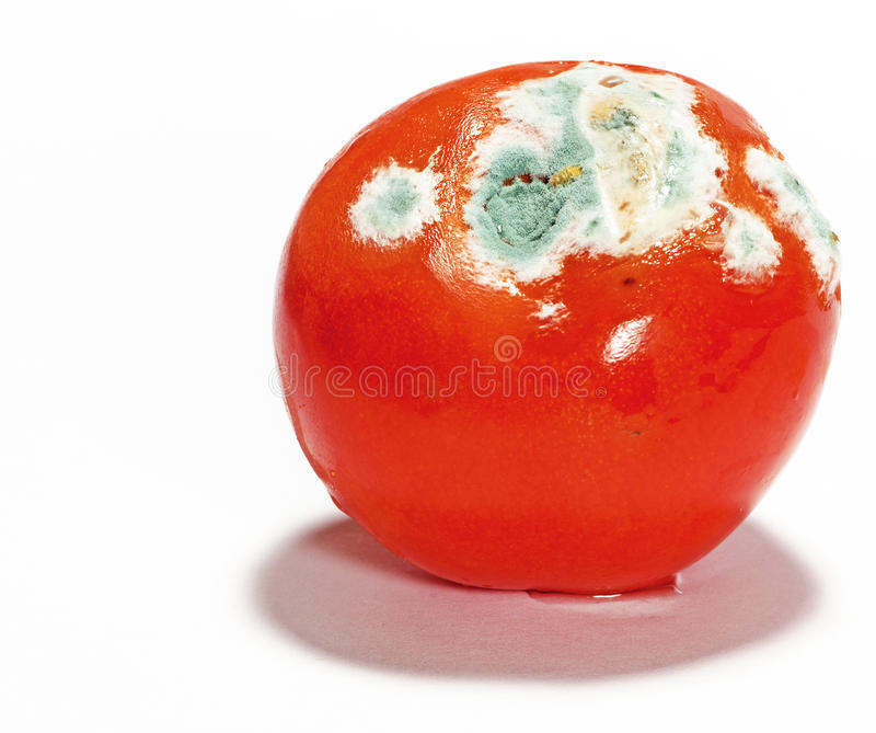 Download Mouldy Tomato stock image. Image of fuzz, contaminate - 23547623