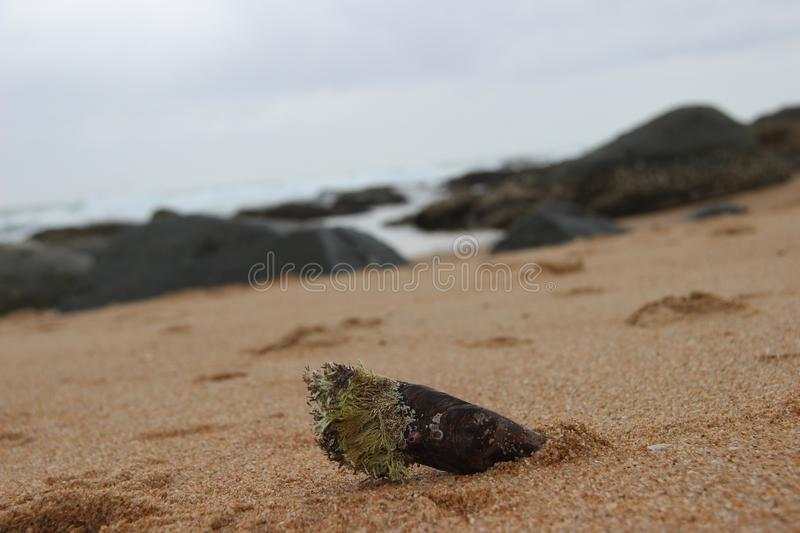 Moule 2 photographie stock
