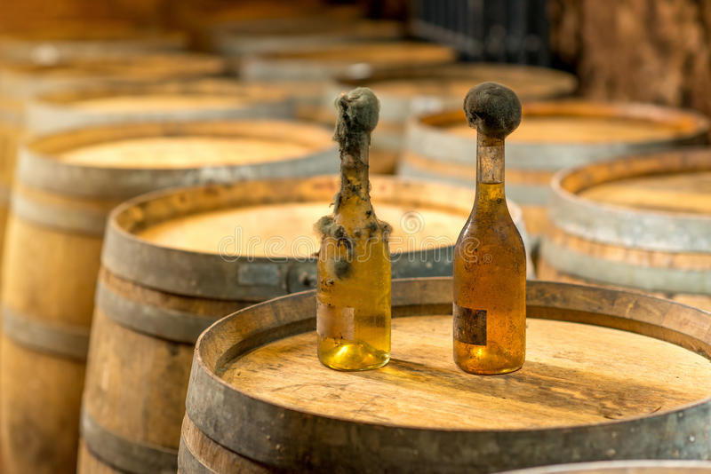 Moule de noir de bouteilles de vin dans la cave photos stock