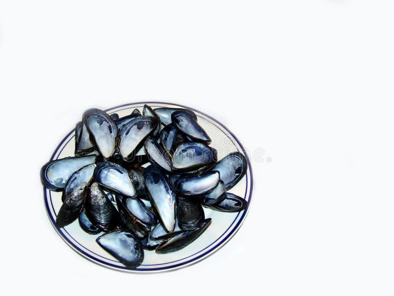 Download Moules photo stock. Image du frais, manger, shellfish, moule - 736852