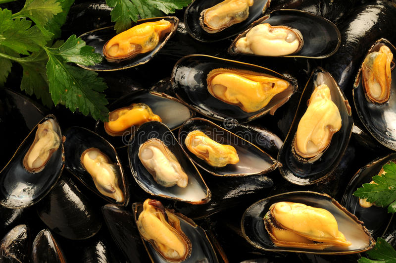 Moules bleues image stock