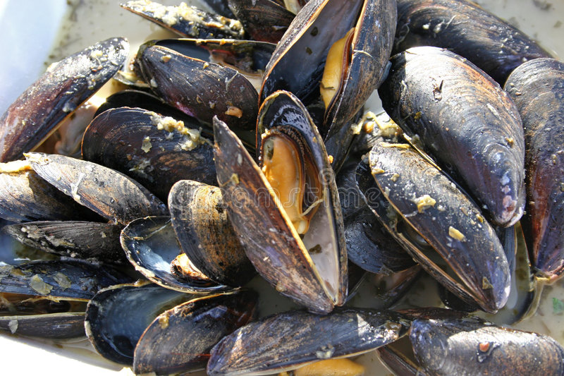 Moules cuites image stock