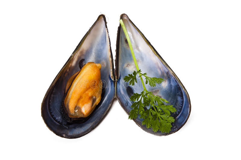 Moules d'isolement photographie stock