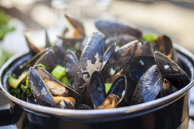 Moules Mariniere musslor fotografering för bildbyråer