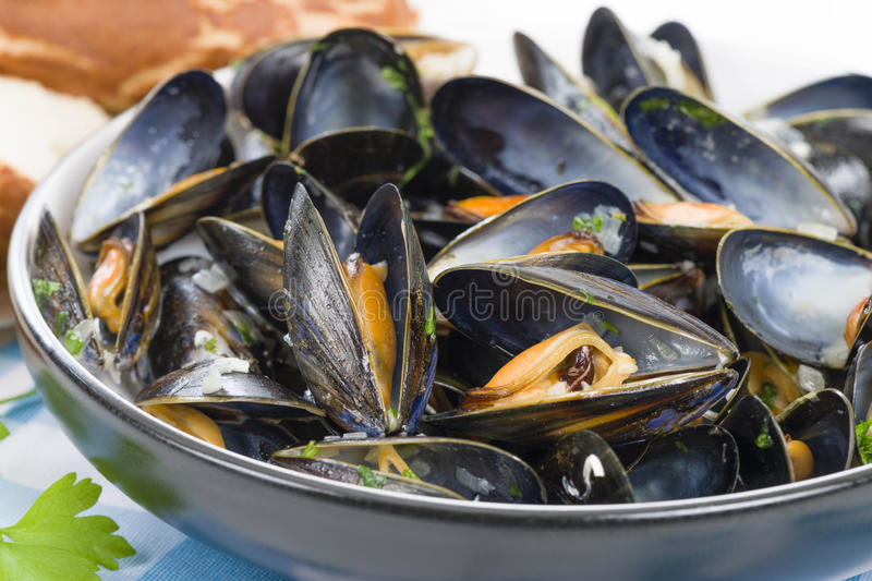 Download Moules Marinieres stock image. Image of course, gingham - 36185439