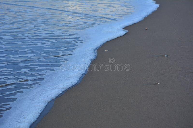 Moules partout par la mer photographie stock