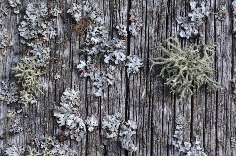 moulez intéressant fongueux gris historique de croissances de mousse vieil rétro photo stock