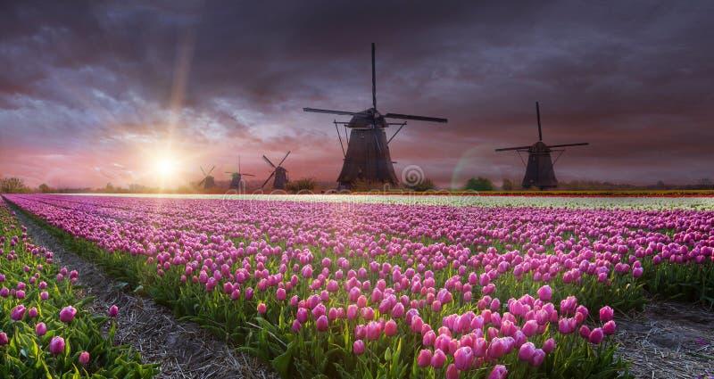 Moulin à vent avec le champ de tulipe en Hollande image libre de droits