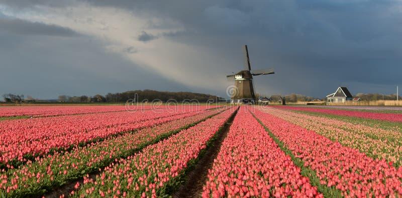 Moulin à vent avec les tulipes roses sous un ciel nuageux photo stock
