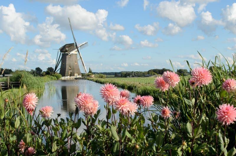 Moulin à vent et fleurs en Hollande photos libres de droits