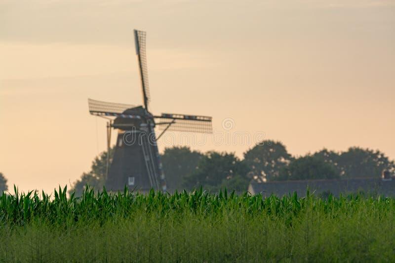 Moulin à vent néerlandais, petit village dans le Brabant-Septentrional, moulin et maïs fi images libres de droits