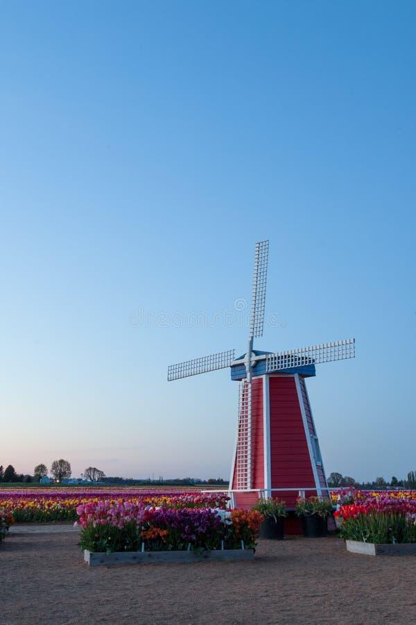 Moulin à vent sur Tulip Farm photos libres de droits