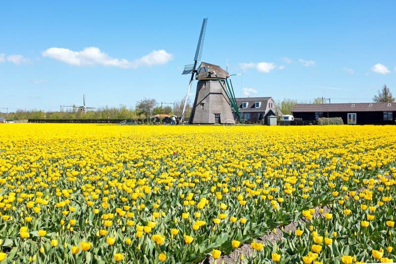 Moulin à vent traditionnel avec les tulipes de floraison dans un paysage néerlandais images libres de droits