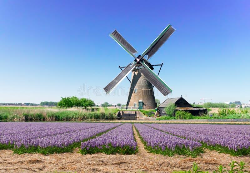 Moulins de vent hollandais photos libres de droits