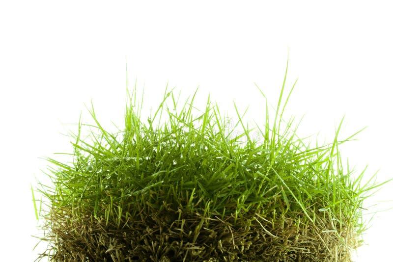 Mound Of Zoysia Wet Grass Stock Photo