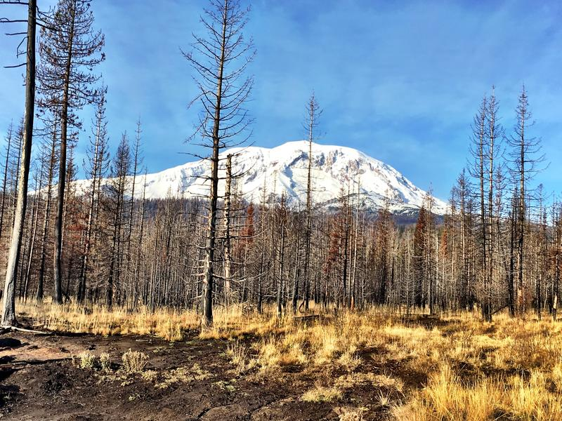 Mount Adams from Cougar Creek Fire stock photo